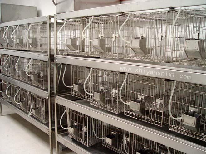 动物实验室